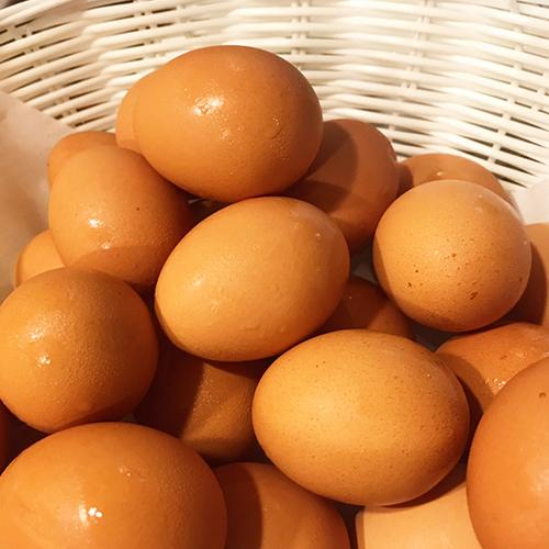 千葉県産指定養鶏場 から仕入れる「赤玉たまご」